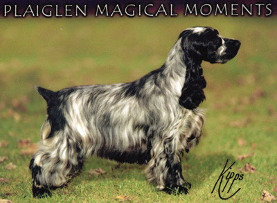 plaiglen_magical_moment