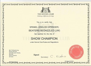 bedazzled_champ